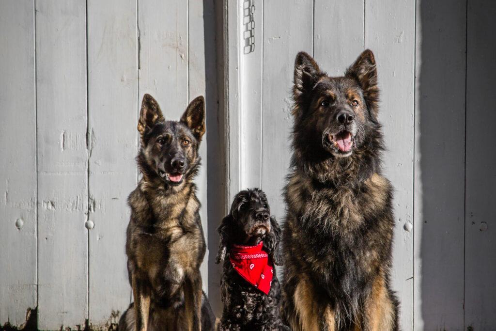 Isaac, Doni og Tyden